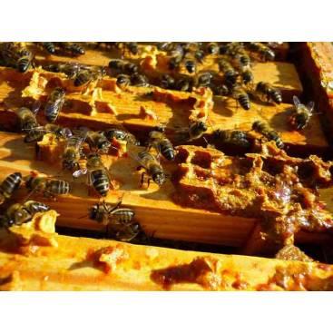 عسل بره موم 350 گرمی