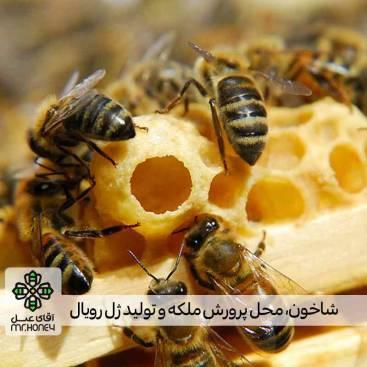 ژل رویال 4 ستاره 25 گرمی فقط برای شهر تهران