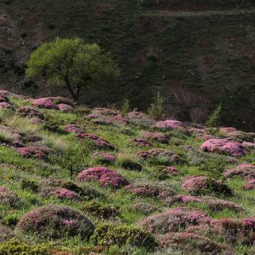 چهل گیاه کوهستان 400 گرمی