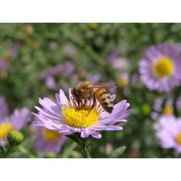 عسل چهل گیاه دشت ممتاز 800 گرمی